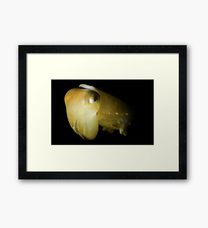 Snooted Cuttlefish Framed Print