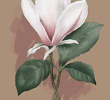 magnolia illustration by martajasinska