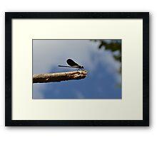 158 - libellula Framed Print