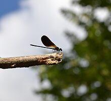 160 - libellula by giorgenko