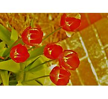 The Red Lightening Tulips Photographic Print