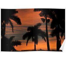 Royal Palm Sunset Poster