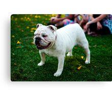 Cute Bulldog Canvas Print