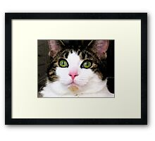 Mina The Cat Framed Print