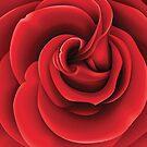Rose by evadelia
