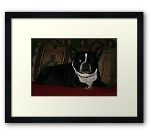 Zoe relaxing Framed Print