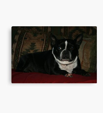 Zoe relaxing Canvas Print