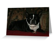 Zoe relaxing Greeting Card