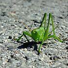 Bush-cricket by Bluesrose