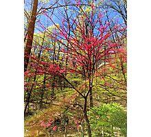 Spectrum through the trees Photographic Print
