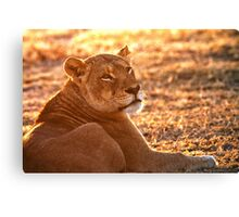 The Morning Glow Before The Hunt Canvas Print