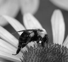 Mono Bumble by Keala
