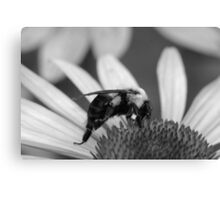 Mono Bumble Canvas Print