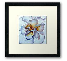 Translucent Blossom (2 of 3) Framed Print