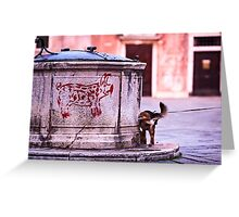 Pig & Pee - Venice, Italy Greeting Card