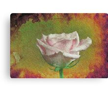 A painting of pink Rose . Canvas Print