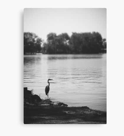 Heron Harbor Canvas Print