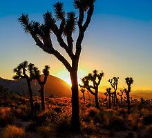 Mojave Desert by Radek Hofman