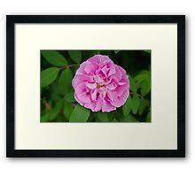 Pink Nature Framed Print