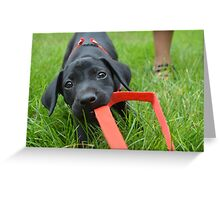Puppy!  Greeting Card