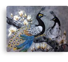 Peacock date in a magnolia tree Canvas Print