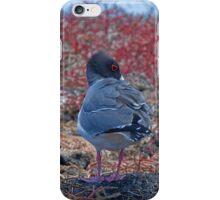 Ecuador. Galapagos Islands. South Plaza Island. Swallow-tailed Gulls. iPhone Case/Skin