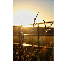 Macro Sunset #2 Photographic Print