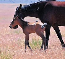 Newborn Foal Tests His Legs by Kelly Jay