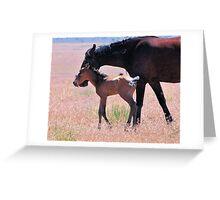 Newborn Foal Tests His Legs Greeting Card