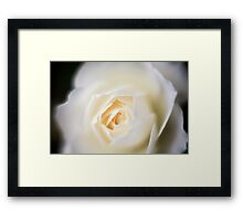 selective focus close up of a white rose flower Framed Print