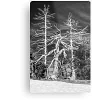 Crater Lake Sentinels Monochrome Metal Print