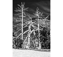 Crater Lake Sentinels Monochrome Photographic Print