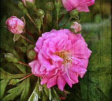 Secondhand Rose Enhanced #2 by MotherNature2
