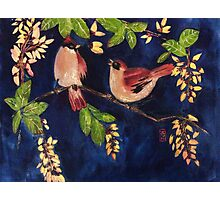 Chubby birds in the moonlight Photographic Print