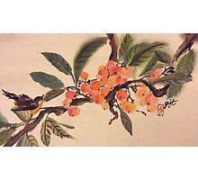 Kumquat paradise Photographic Print