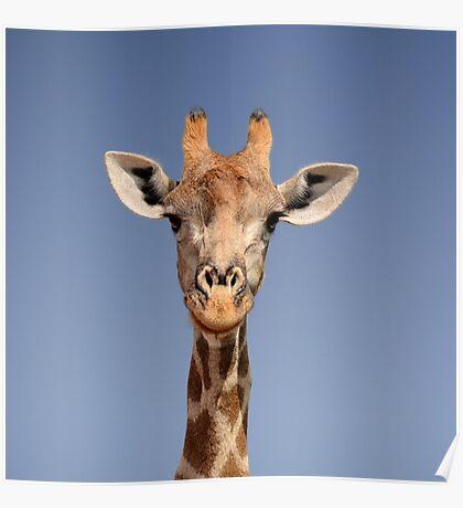 Giraffe Closeup Face Portrait Poster
