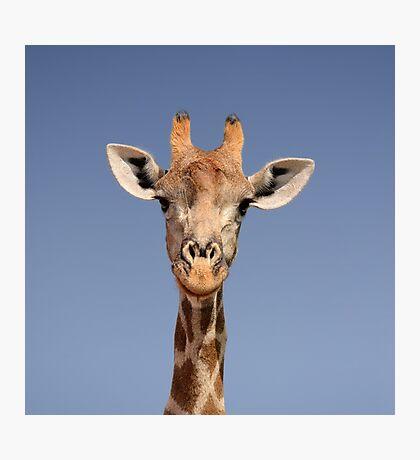 Giraffe Closeup Face Portrait Photographic Print