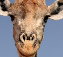 Giraffe Closeup Face Portrait Sticker