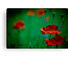 Vibrant red flowers in sea of green Canvas Print