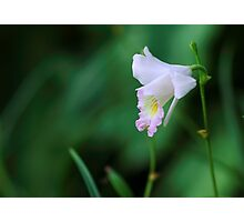Wild pink orchid Photographic Print