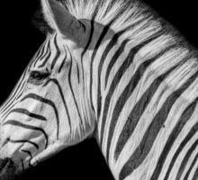 Black And White Zebra Portrait Sticker
