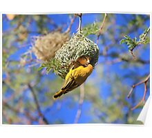 Masked Weaver - African Wild Birds - Home Shopping Poster