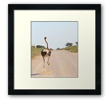 Ostrich - African Wild Birds - Road Runner Framed Print