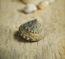 Cone Shell. by Lyn  Randle