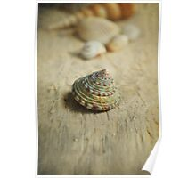 Cone Shell. Poster