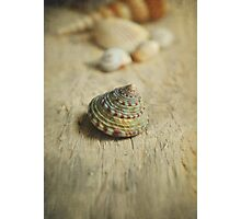 Cone Shell. Photographic Print