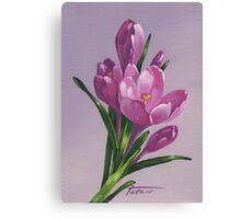 Pink crocuses - acrylic painting Canvas Print