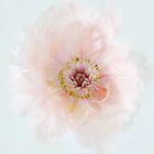 Pretty Pastel Peony by Alyson Fennell