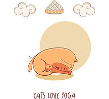 Red Yoga Cat in Head To Knee Forward Bend Photographic Print