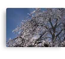 Sparkling Icy Tree - Mother Nature's Decoration Metal Print